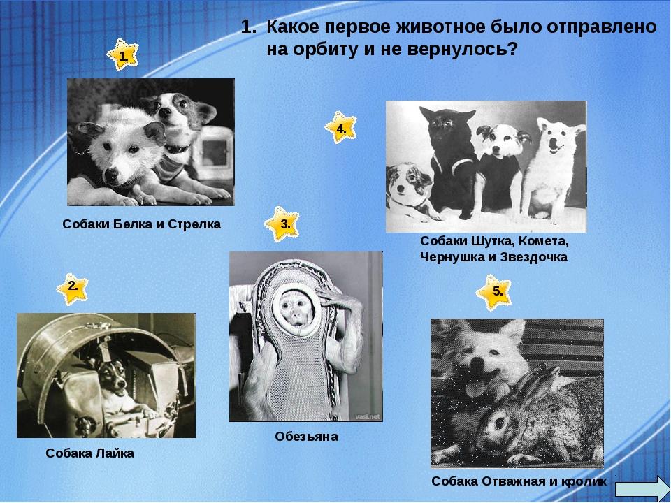 Какое первое животное было отправлено на орбиту и не вернулось? Собака Отважн...