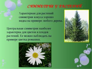СИММЕТРИЯ У РАСТЕНИЙ: Характерная для растений симметрия конуса хорошо видна