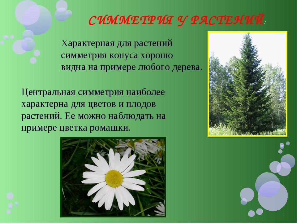 СИММЕТРИЯ У РАСТЕНИЙ: Характерная для растений симметрия конуса хорошо видна...
