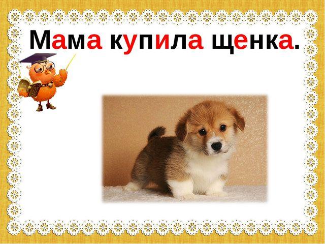 Мама купила щенка.