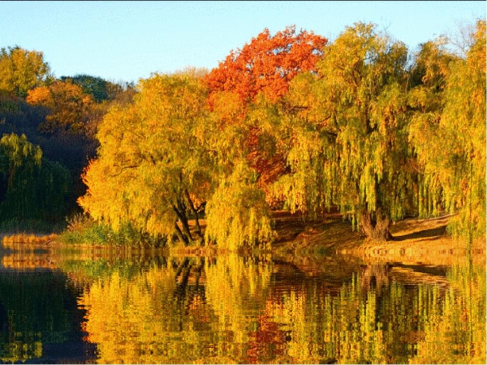 Осенняя анимация картинки, под открытки открытка