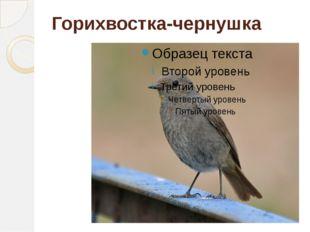 Горихвостка-чернушка
