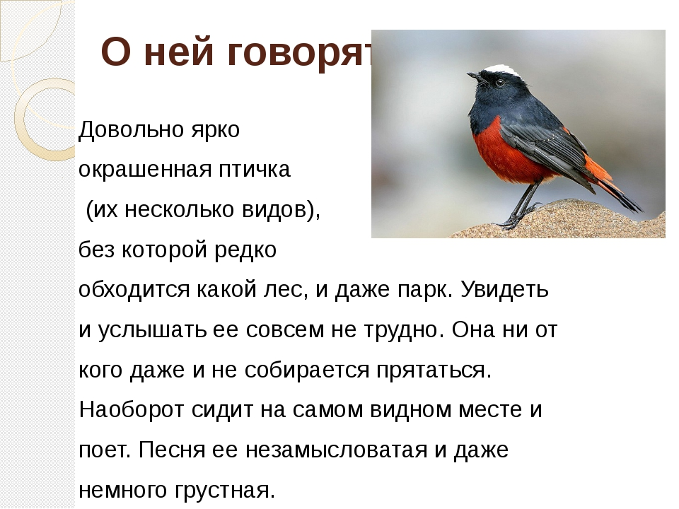 О ней говорят. Довольно ярко окрашенная птичка (их несколько видов), без кот...