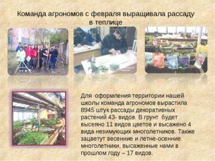 Команда агрономов с февраля выращивала рассаду в теплице Для оформления терри