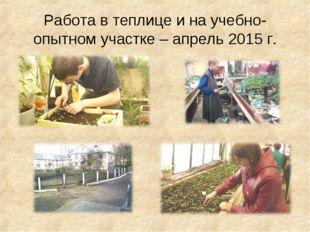 Работа в теплице и на учебно-опытном участке – апрель 2015 г.