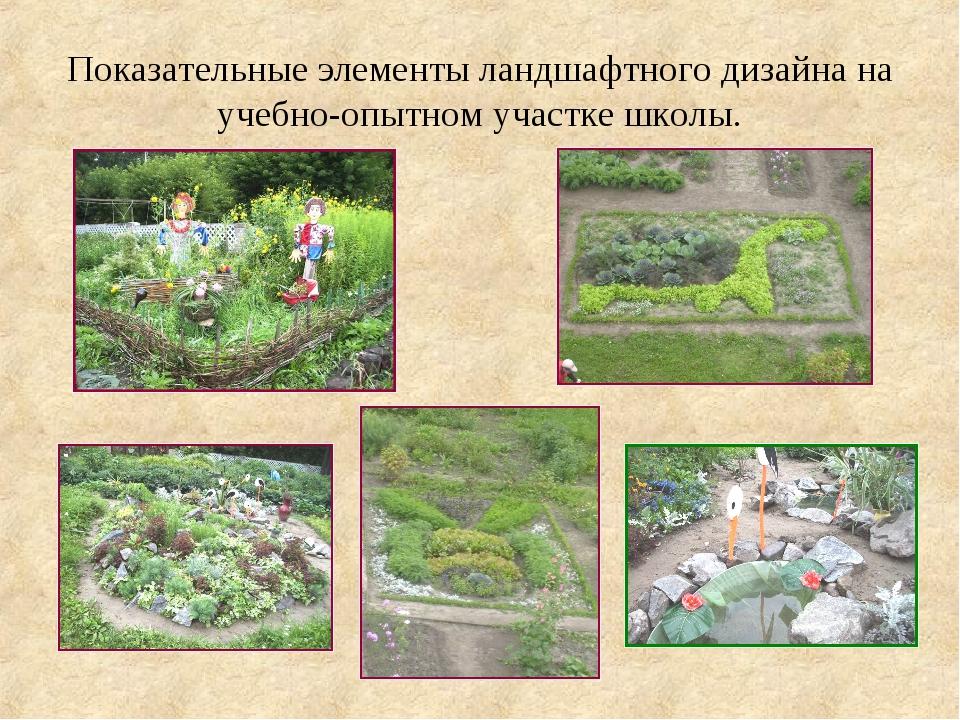 Показательные элементы ландшафтного дизайна на учебно-опытном участке школы.