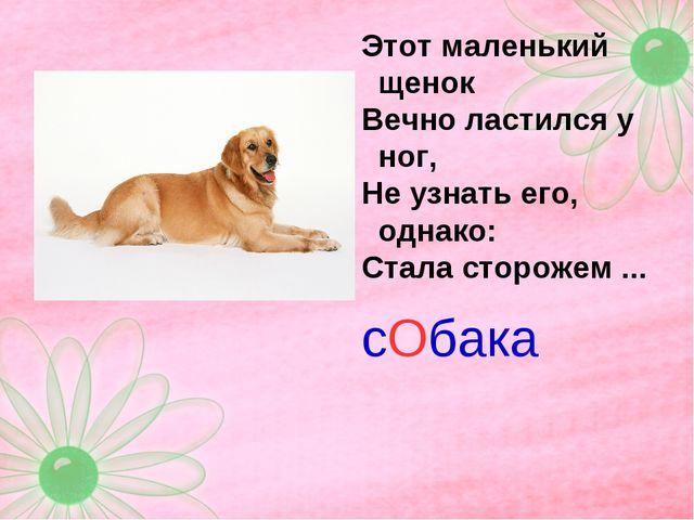 Этот маленький щенок Вечно ластился у ног, Не узнать его, однако: Стала сторо...