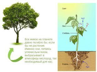Все живое на планете давно погибло бы, если бы не растения. Именно они, питая