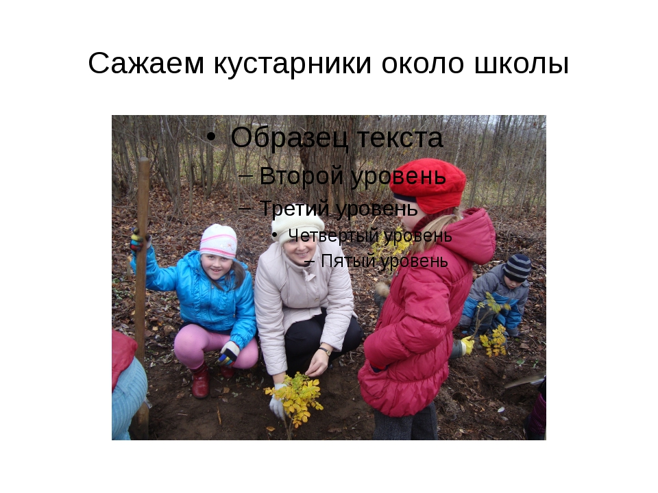 Сажаем кустарники около школы