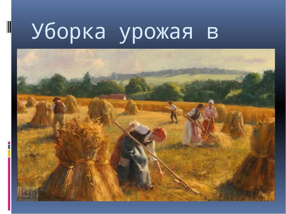 Уборка урожая в поле