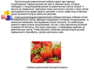 Крупноплодная ремонтантная клубника имеет два периода плодоношения. Первый ур