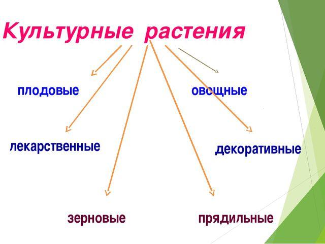 Культурные растения плодовые овощные зерновые прядильные декоративные лекарст...