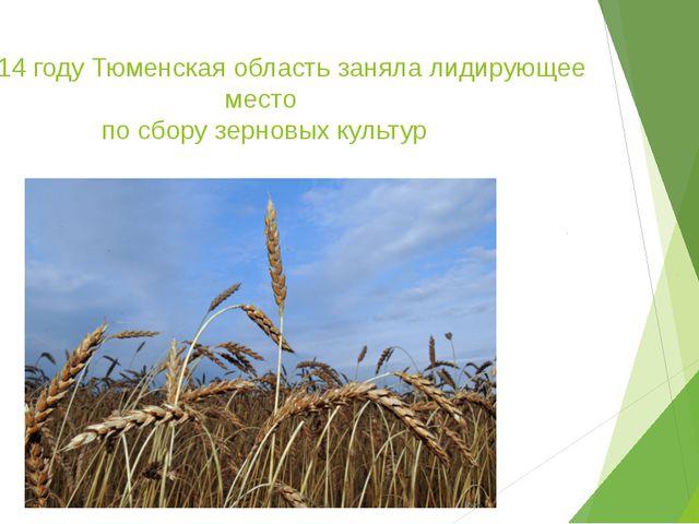 В 2014 году Тюменская область заняла лидирующее место по сбору зерновых культур