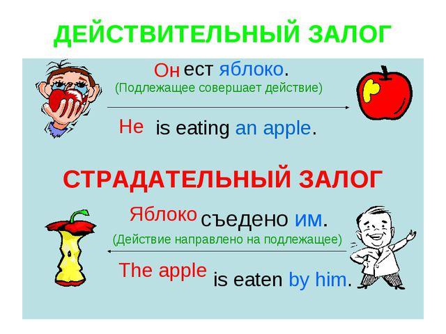 ДЕЙСТВИТЕЛЬНЫЙ ЗАЛОГ ест яблоко. (Подлежащее совершает действие) is eating an...