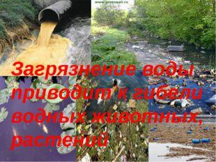 Загрязнение воды приводит к гибели водных животных, растений