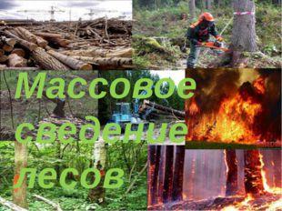 Массовое сведение лесов