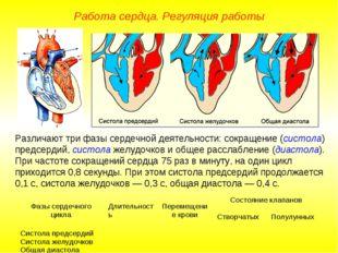 Работа сердца. Регуляция работы Различают три фазы сердечной деятельности: со