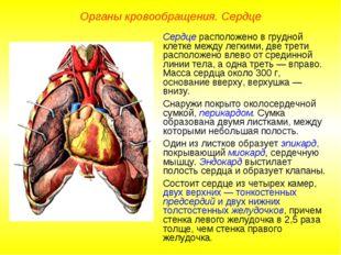 Органы кровообращения. Сердце Сердце расположено в грудной клетке между легки