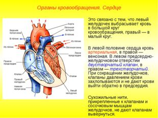 Органы кровообращения. Сердце Это связано с тем, что левый желудочек выбрасыв