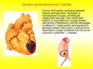 Органы кровообращения. Сердце Около 10% крови, выбрасываемой левым желудочком