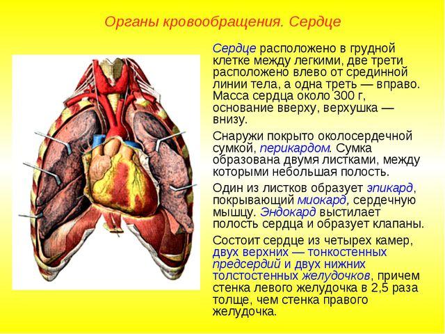 Органы кровообращения. Сердце Сердце расположено в грудной клетке между легки...