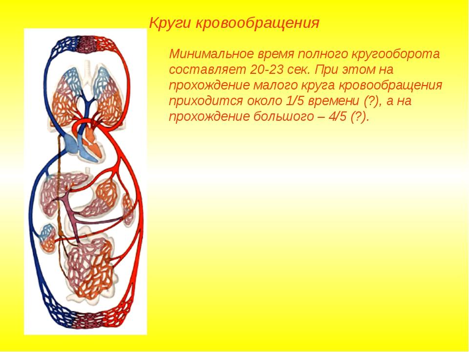 Круги кровообращения Минимальное время полного кругооборота составляет 20-23...