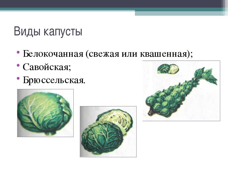 Виды капусты Белокочанная (свежая или квашенная); Савойская; Брюссельская.