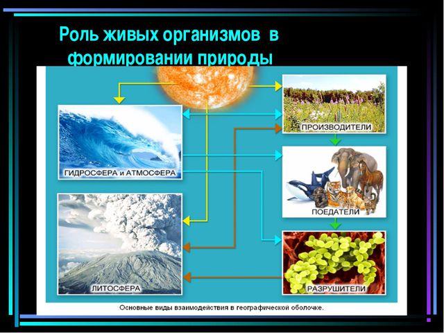 Роль живых организмов в формировании природы