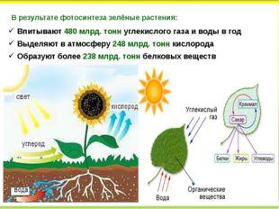 В результате фотосинтеза зелёные растения: Впитывают 480 млрд. тонн углекисло