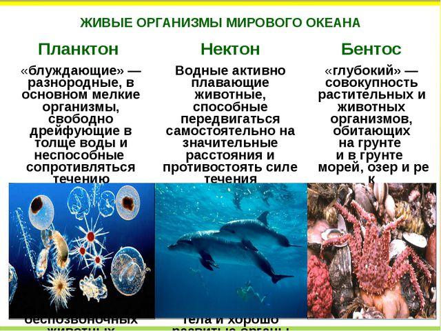 ЖИВЫЕ ОРГАНИЗМЫ МИРОВОГО ОКЕАНА Планктон Нектон Бентос «блуждающие»— разноро...