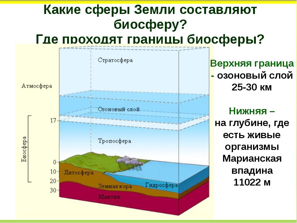 Какие сферы Земли составляют биосферу? Где проходят границы биосферы? Верхняя...