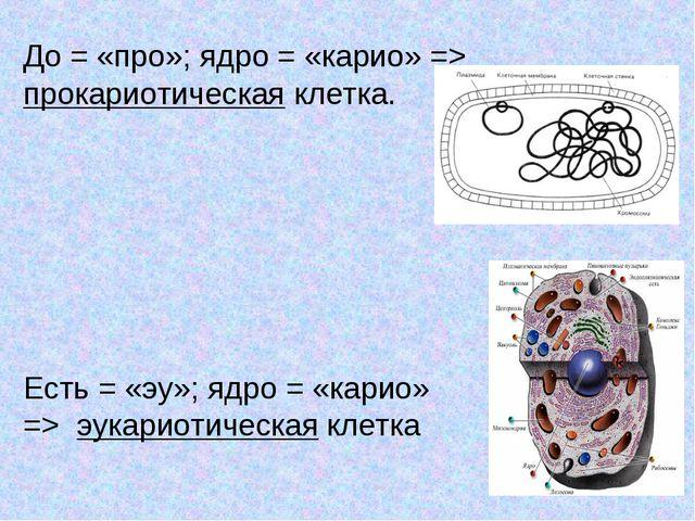 До = «про»; ядро = «карио» => прокариотическая клетка. Есть = «эу»; ядро = «к...