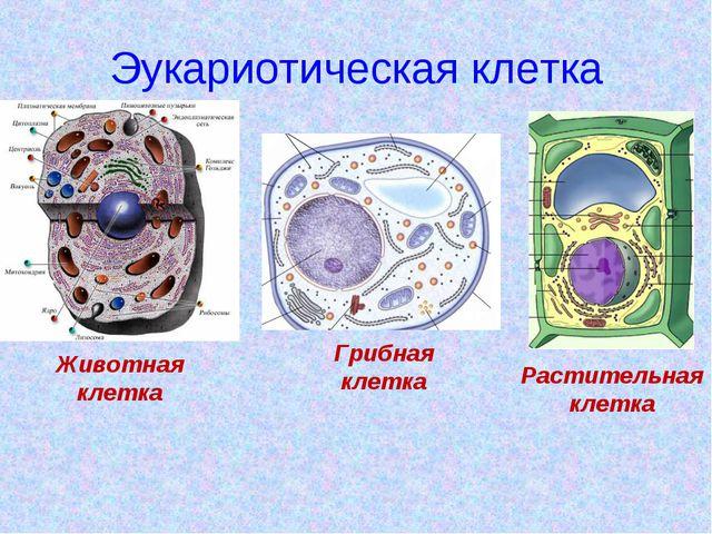 Эукариотическая клетка Животная клетка Грибная клетка Растительная клетка