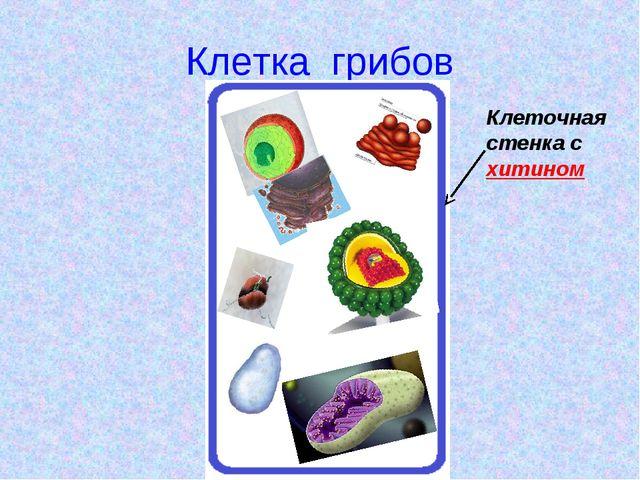 Клетка грибов Клеточная стенка с хитином