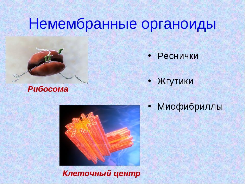 Немембранные органоиды Реснички Жгутики Миофибриллы Рибосома Клеточный центр