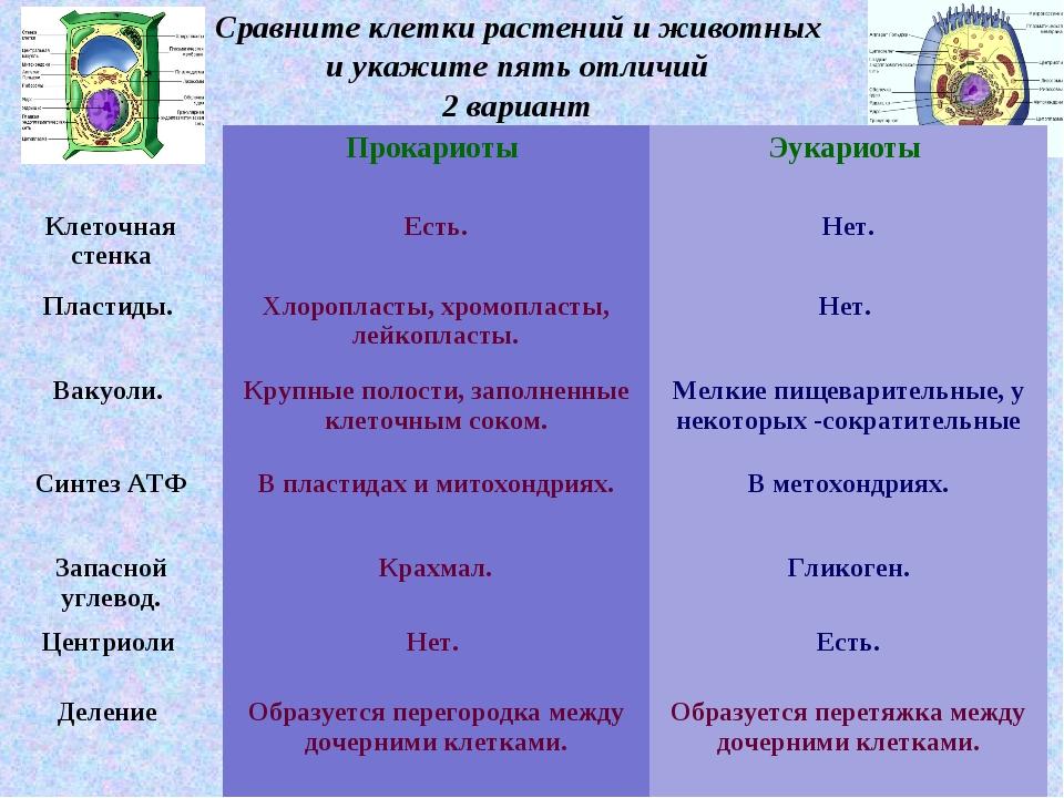 * Сравните клетки растений и животных и укажите пять отличий 2 вариант Призна...