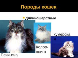 Породы кошек. Длинношерстные Пекинская Колор- поинт кумерская