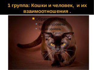 1 группа: Кошки и человек, и их взаимоотношения .