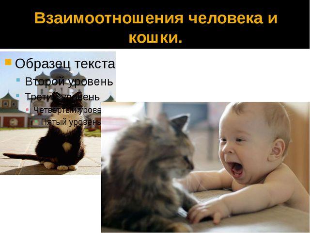 Взаимоотношения человека и кошки.