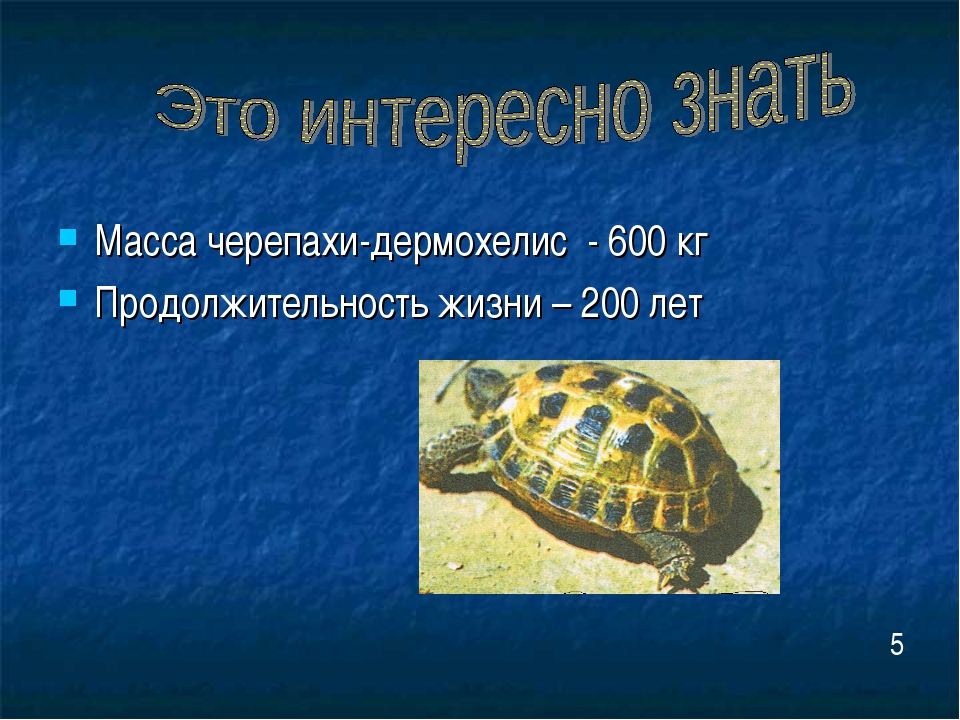 Масса черепахи-дермохелис - 600 кг Продолжительность жизни – 200 лет 5