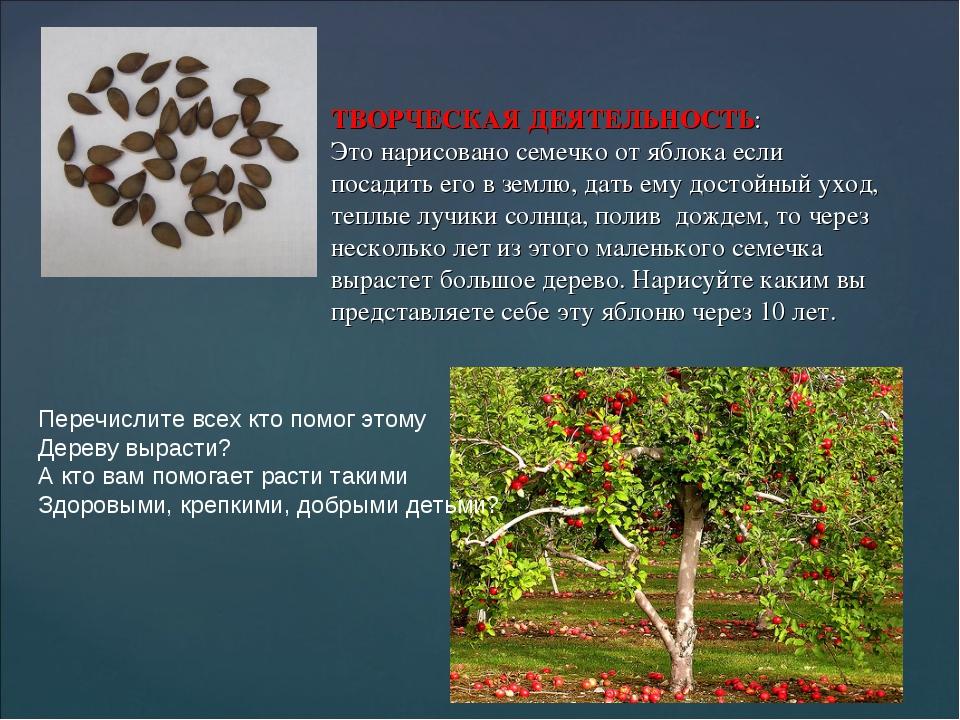 ТВОРЧЕСКАЯ ДЕЯТЕЛЬНОСТЬ: Это нарисовано семечко от яблока если посадить его в...