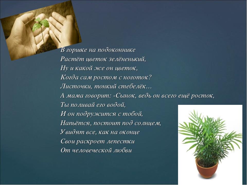 В горшке на подоконнике Растёт цветок зелёненький, Ну и какой же он цветок,...