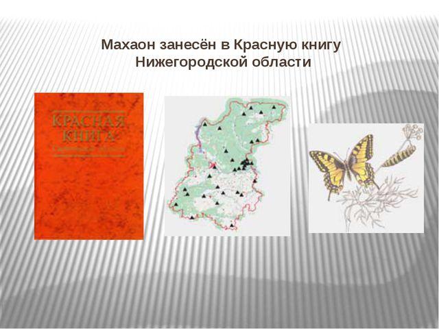 Махаон занесён в Красную книгу Нижегородской области