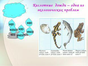 Кислотные дожди – одна из экологических проблем Н2О Н2О Н2О NО2 SО2 Н2S Н2SО3