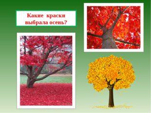 Какие краски выбрала осень?