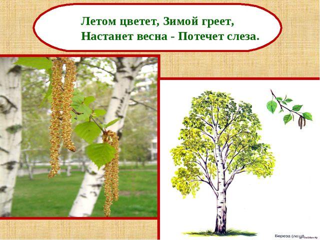 Летом цветет, Зимой греет, Настанет весна - Потечет слеза.