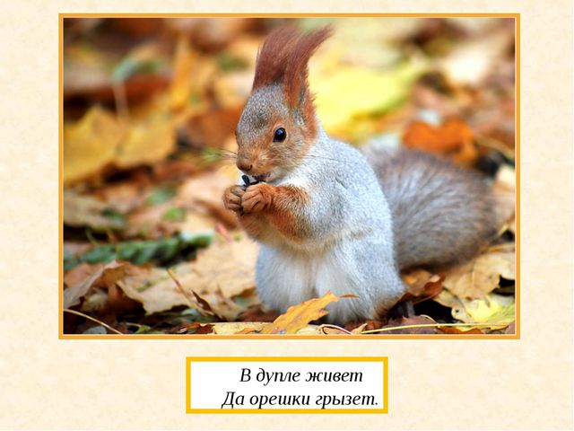 В дупле живет Да орешки грызет.