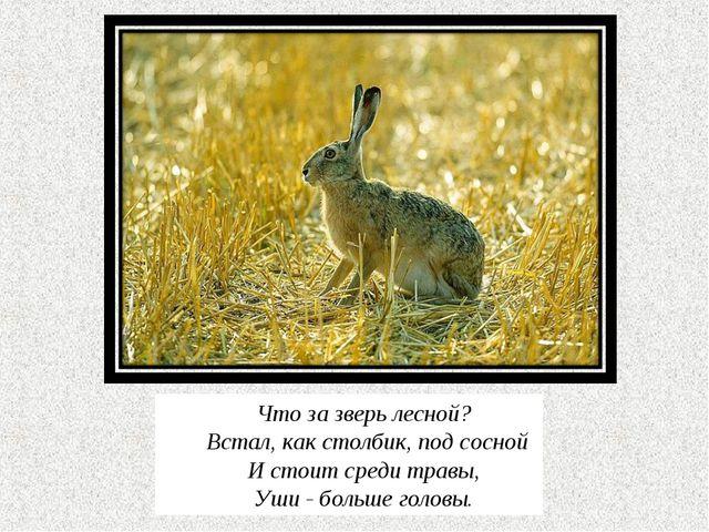 Что за зверь лесной? Встал, как столбик, под сосной И стоит среди травы, Уши...