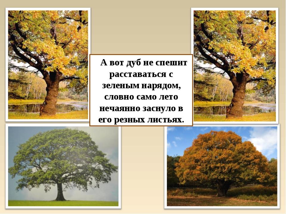 А вот дуб не спешит расставаться с зеленым нарядом, словно само лето нечаянно...