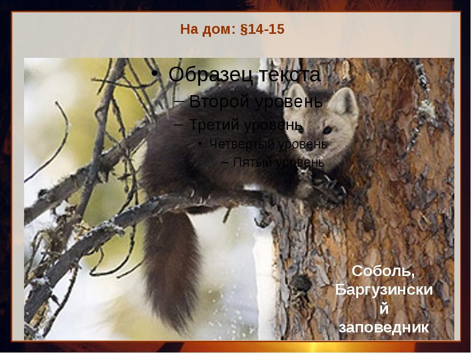 На дом: §14-15 Соболь, Баргузинский заповедник